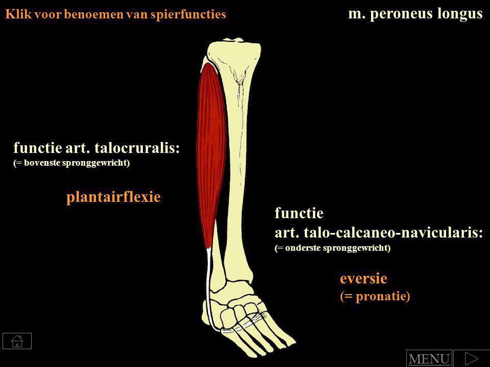 functie art.talocruralis: (= bovenste spronggewricht) plantairflexie functie art.