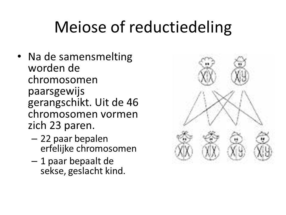 Meiose of reductiedeling Na de samensmelting worden de chromosomen paarsgewijs gerangschikt.