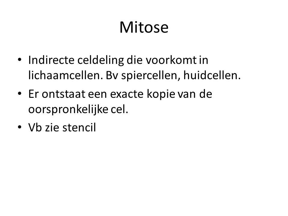 Mitose Indirecte celdeling die voorkomt in lichaamcellen.