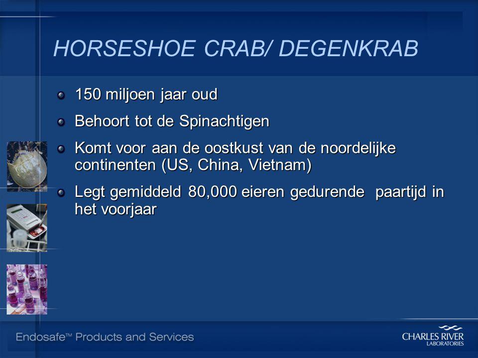 HORSESHOE CRAB/ DEGENKRAB 150 miljoen jaar oud Behoort tot de Spinachtigen Komt voor aan de oostkust van de noordelijke continenten (US, China, Vietnam) Legt gemiddeld 80,000 eieren gedurende paartijd in het voorjaar