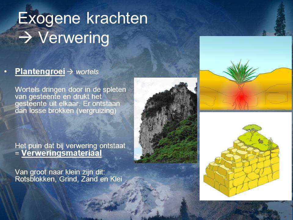Exogene krachten  Verwering Plantengroei  wortels Wortels dringen door in de spleten van gesteente en drukt het gesteente uit elkaar. Er ontstaan da