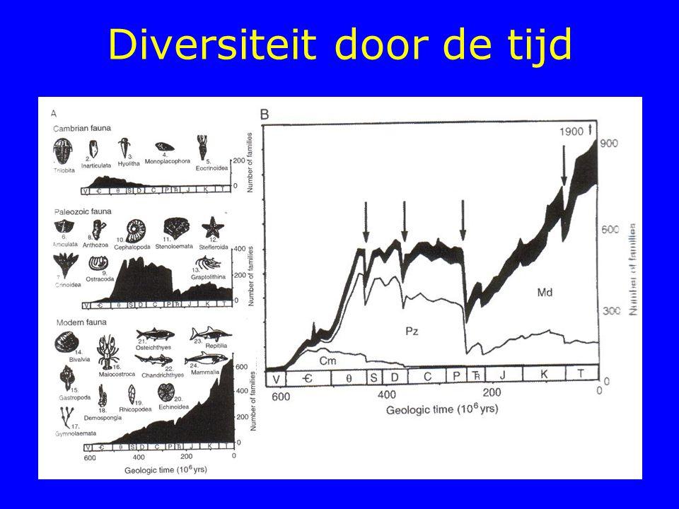 Er is nog een derde verklaringsmodel voor hoge biodiversiteit : Competitie en chaos Kolonisatie en extinctie Hierarchie en schaal