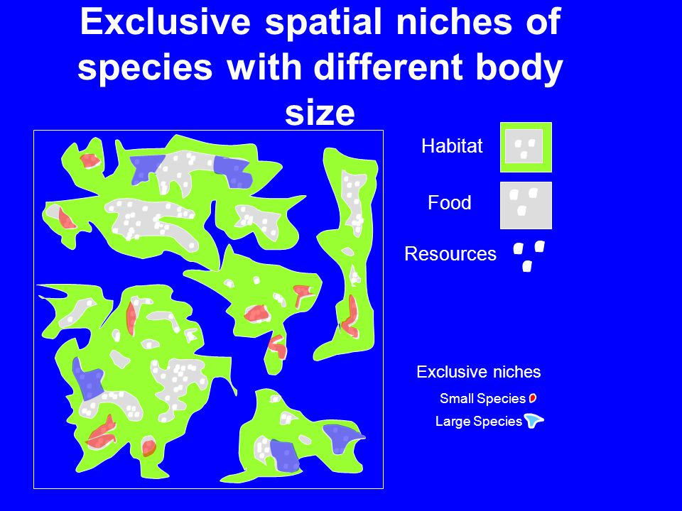 Habitat Food Resources Large Species Small Species Exclusive niches Exclusive spatial niches of species with different body size