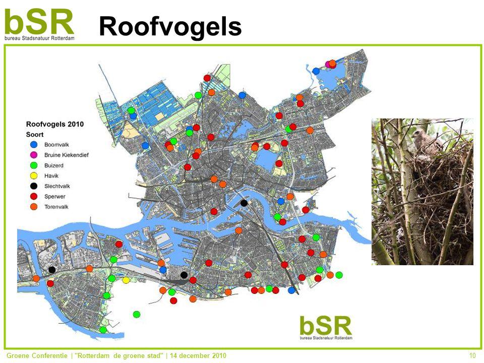 Groene Conferentie | Rotterdam de groene stad | 14 december 201010 Roofvogels