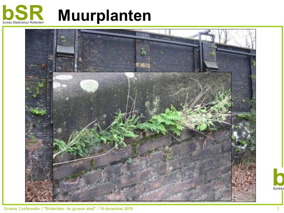 Groene Conferentie | Rotterdam de groene stad | 14 december 20105 Muurplanten