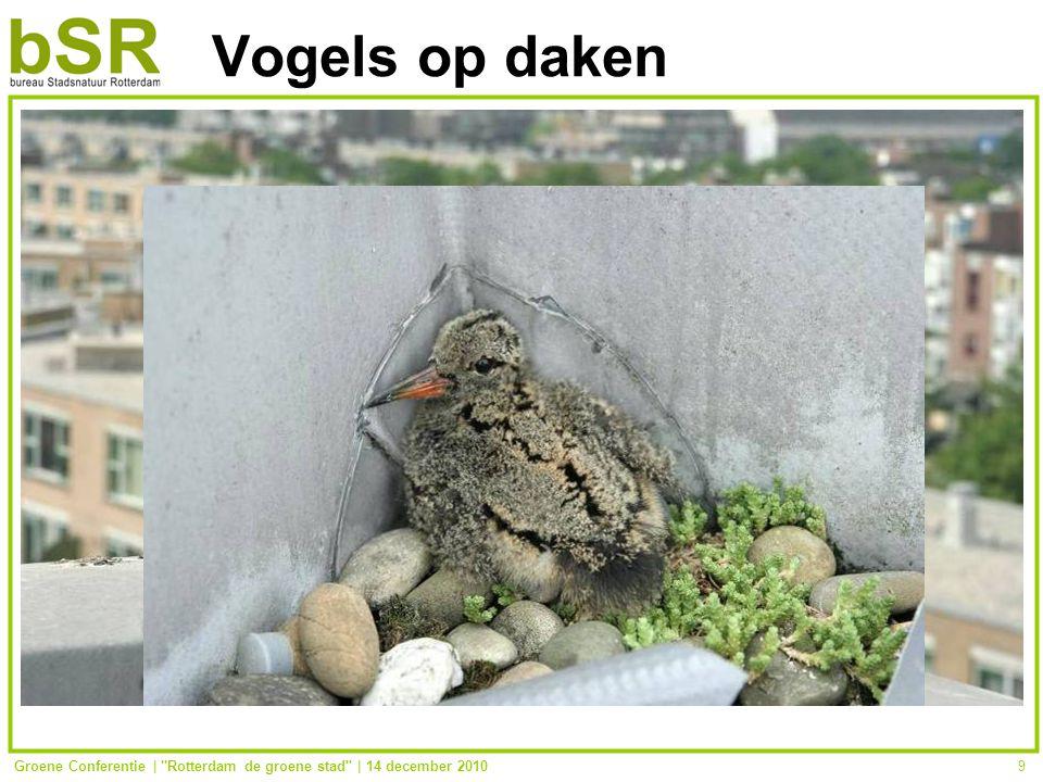 Groene Conferentie | Rotterdam de groene stad | 14 december 20109 Vogels op daken