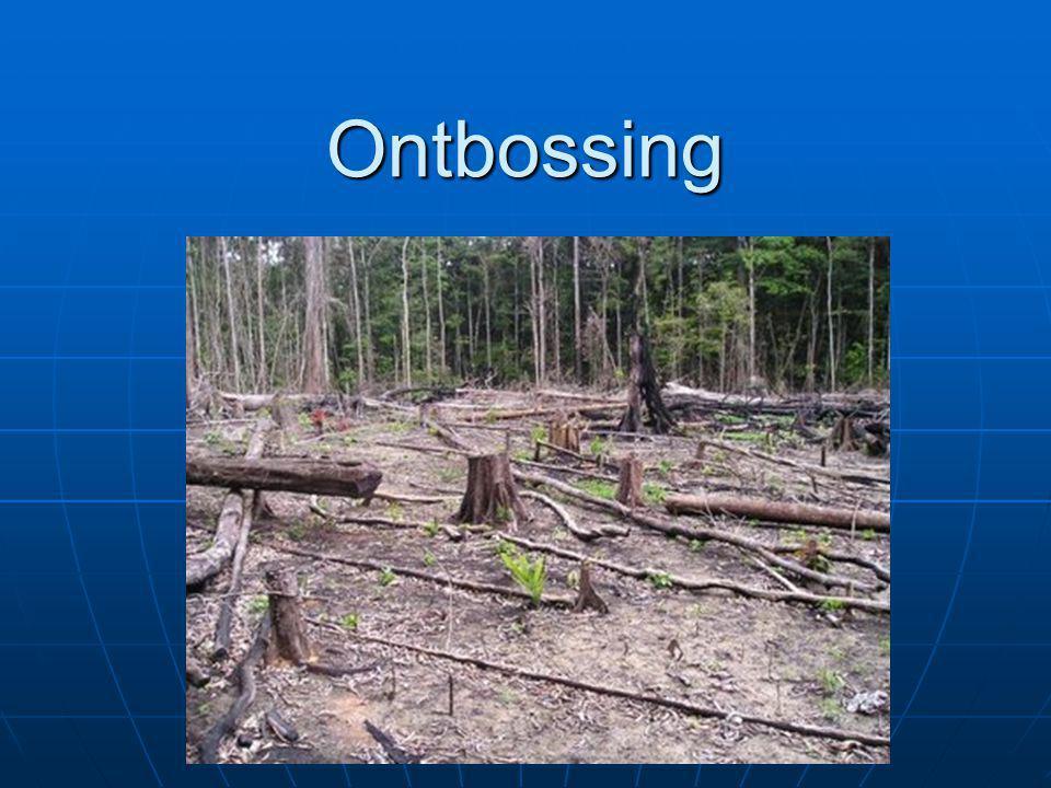 Ontbossing Elk jaar verdwijnt er een groter oppervlak aan oerbos dan Nederland groot is Elk jaar verdwijnt er een groter oppervlak aan oerbos dan Nederland groot is