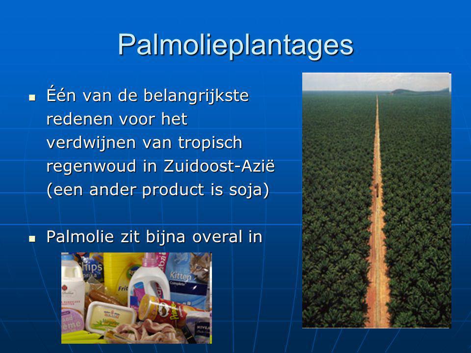 Palmolieplantages Één van de belangrijkste Één van de belangrijkste redenen voor het verdwijnen van tropisch regenwoud in Zuidoost-Azië (een ander pro