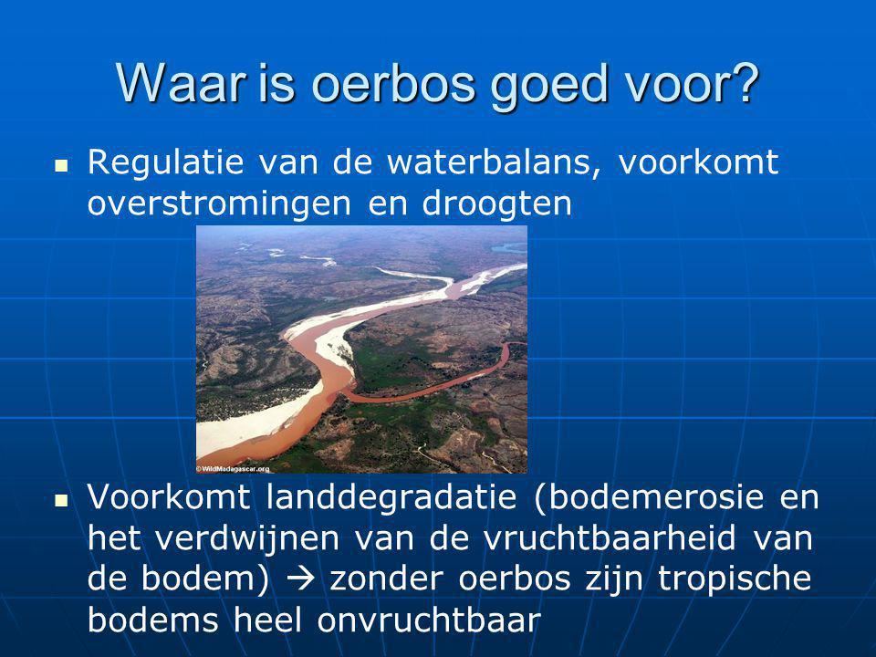 Waar is oerbos goed voor? Regulatie van de waterbalans, voorkomt overstromingen en droogten Voorkomt landdegradatie (bodemerosie en het verdwijnen van
