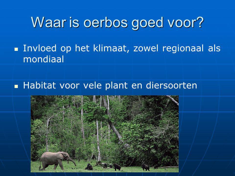 Waar is oerbos goed voor? Invloed op het klimaat, zowel regionaal als mondiaal Habitat voor vele plant en diersoorten
