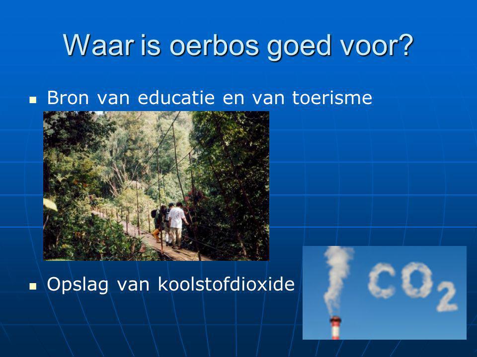 Waar is oerbos goed voor? Bron van educatie en van toerisme Opslag van koolstofdioxide