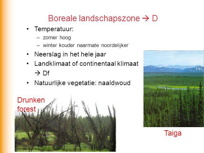 Boreale landschapszone  D Temperatuur: –zomer hoog –winter kouder naarmate noordelijker Neerslag in het hele jaar Landklimaat of continentaal klimaat