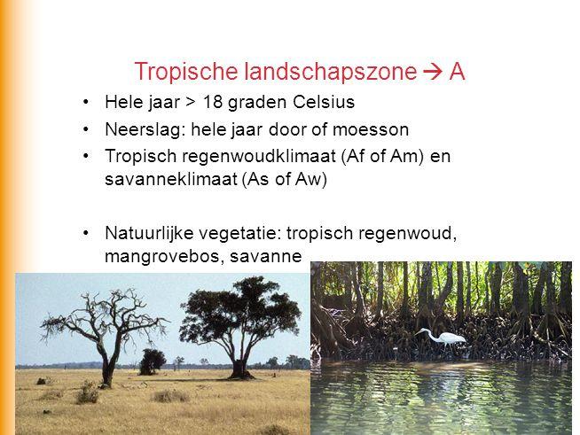 Tropische landschapszone  A Hele jaar > 18 graden Celsius Neerslag: hele jaar door of moesson Tropisch regenwoudklimaat (Af of Am) en savanneklimaat