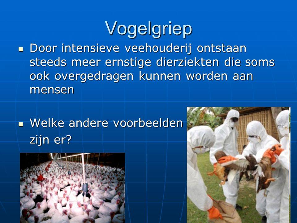 Vogelgriep Door intensieve veehouderij ontstaan steeds meer ernstige dierziekten die soms ook overgedragen kunnen worden aan mensen Door intensieve ve