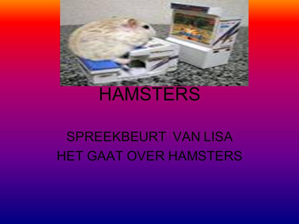 HAMSTERS SPREEKBEURT VAN LISA HET GAAT OVER HAMSTERS