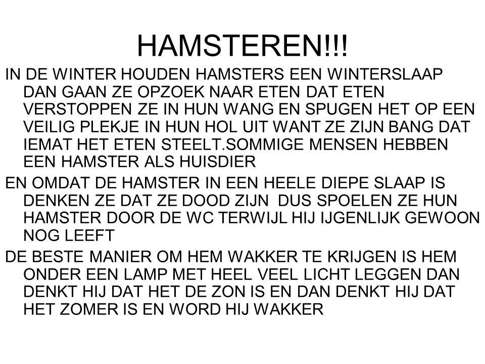 HAMSTEREN!!.