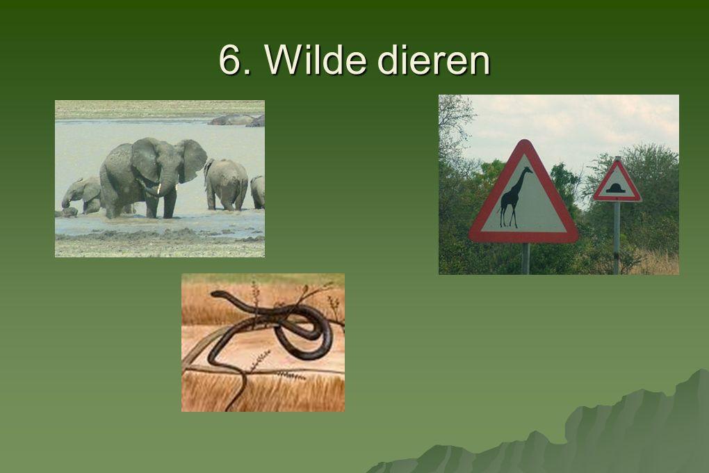 6. Wilde dieren