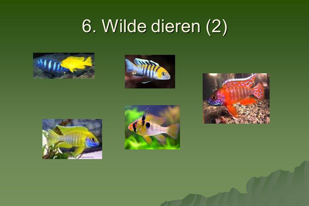 6. Wilde dieren (2)