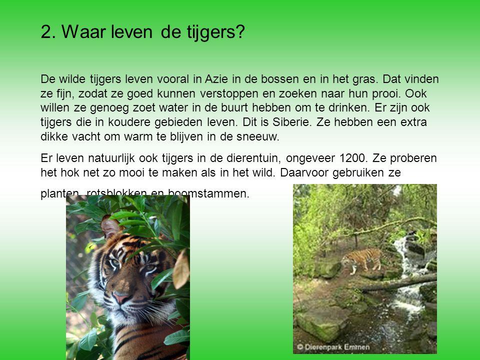 2. Waar leven de tijgers? De wilde tijgers leven vooral in Azie in de bossen en in het gras. Dat vinden ze fijn, zodat ze goed kunnen verstoppen en zo
