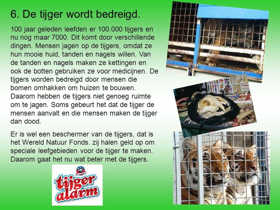 6. De tijger wordt bedreigd. 100 jaar geleden leefden er 100.000 tijgers en nu nog maar 7000. Dit komt door verschillende dingen. Mensen jagen op de t