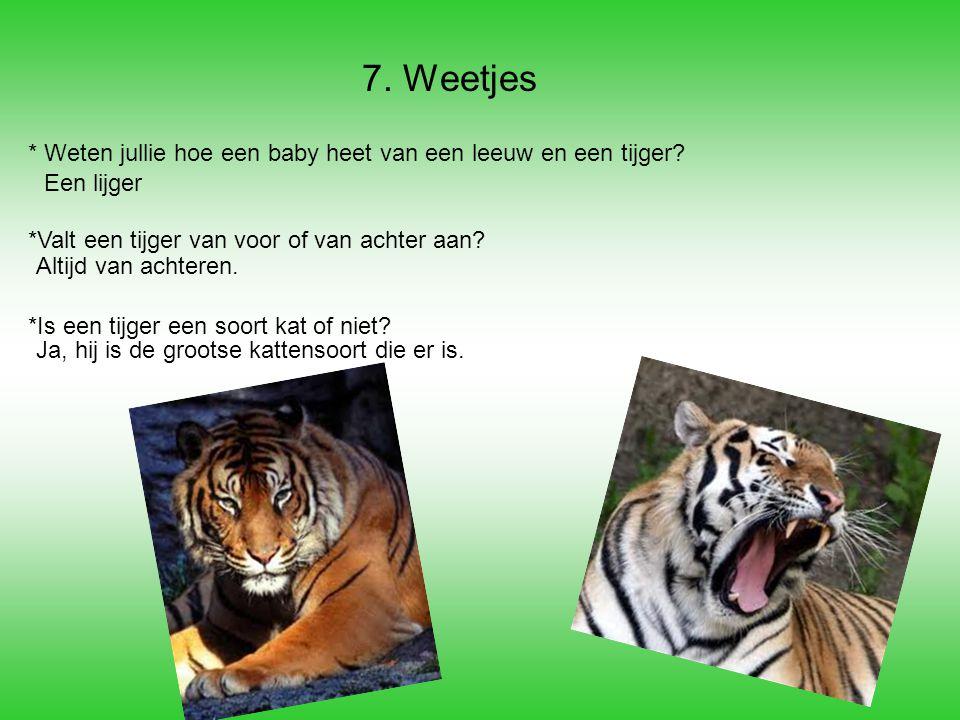 7. Weetjes * Weten jullie hoe een baby heet van een leeuw en een tijger? *Valt een tijger van voor of van achter aan? *Is een tijger een soort kat of