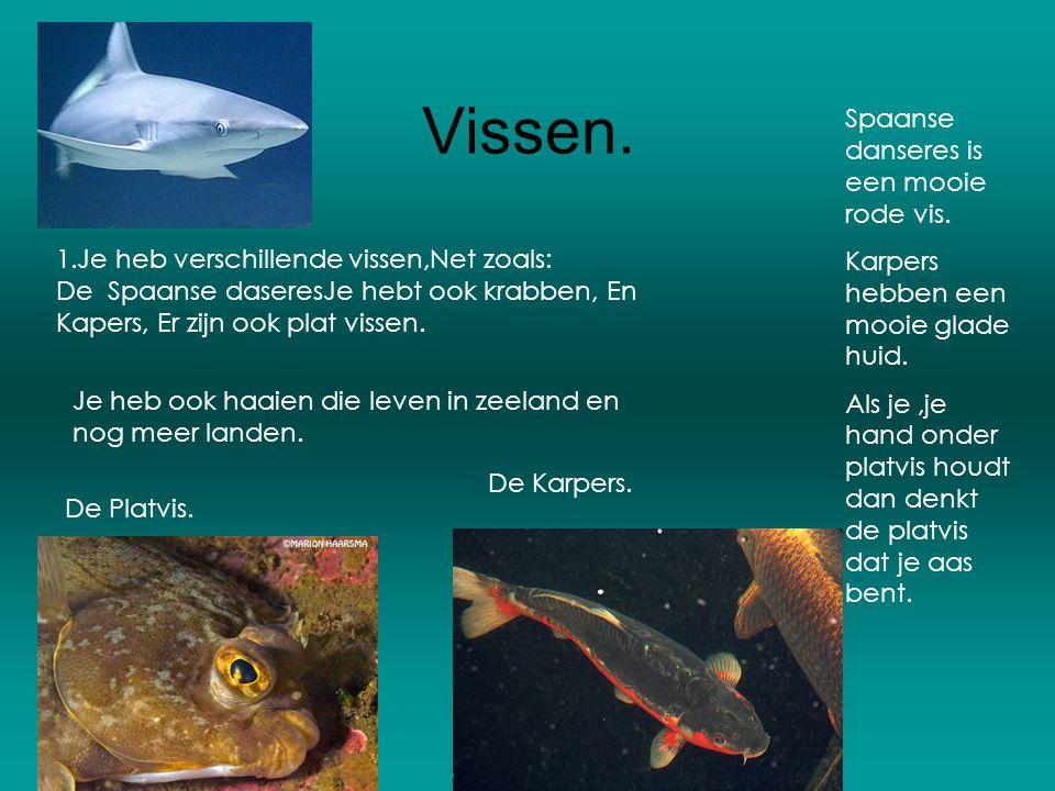 Vissen. 1.Je heb verschillende vissen,Net zoals: De Spaanse daseresJe hebt ook krabben, En Kapers, Er zijn ook plat vissen. Je heb ook haaien die leve