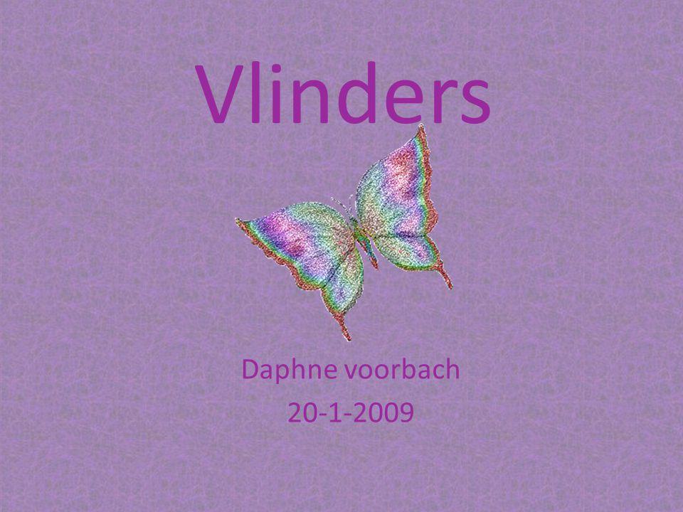 Vlinders Daphne voorbach 20-1-2009