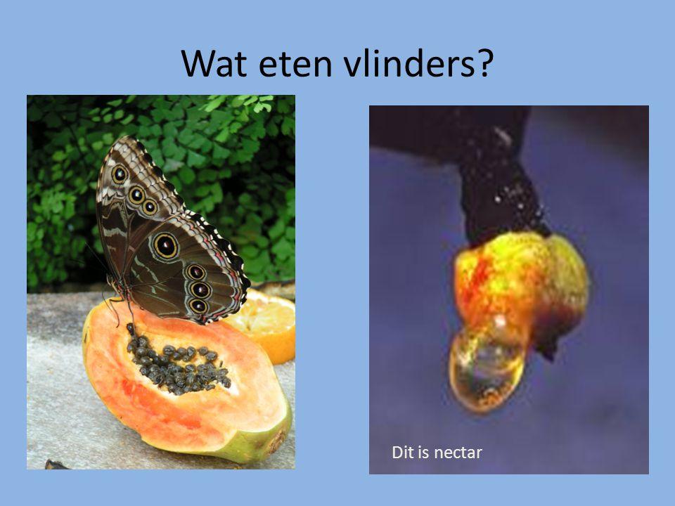 Wat eten vlinders? Dit is nectar
