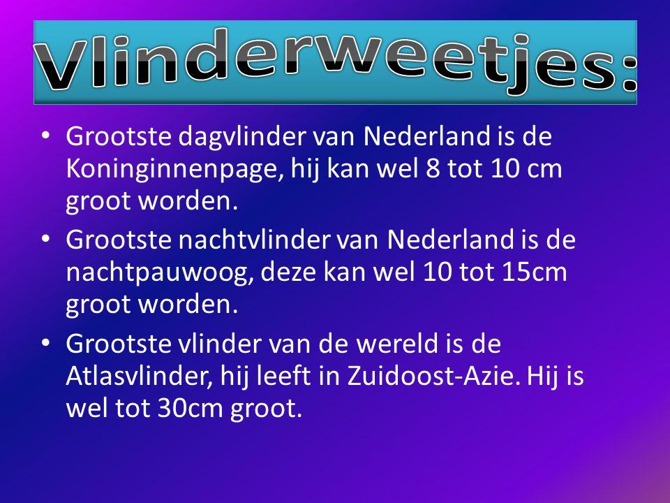 Grootste dagvlinder van Nederland is de Koninginnenpage, hij kan wel 8 tot 10 cm groot worden.