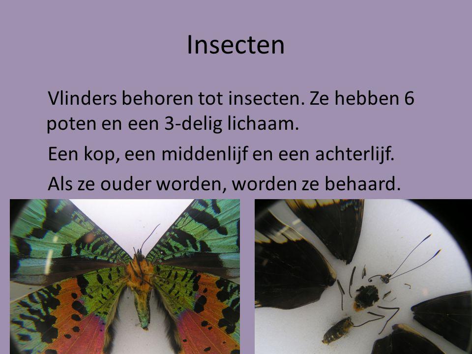 Insecten Vlinders behoren tot insecten.Ze hebben 6 poten en een 3-delig lichaam.