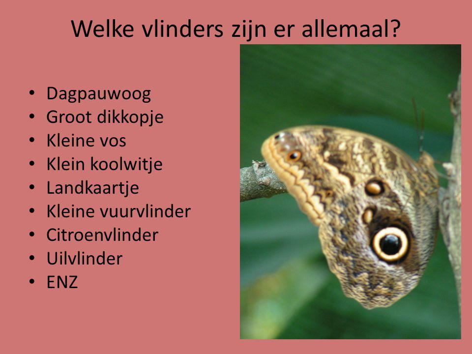 Welke vlinders zijn er allemaal.