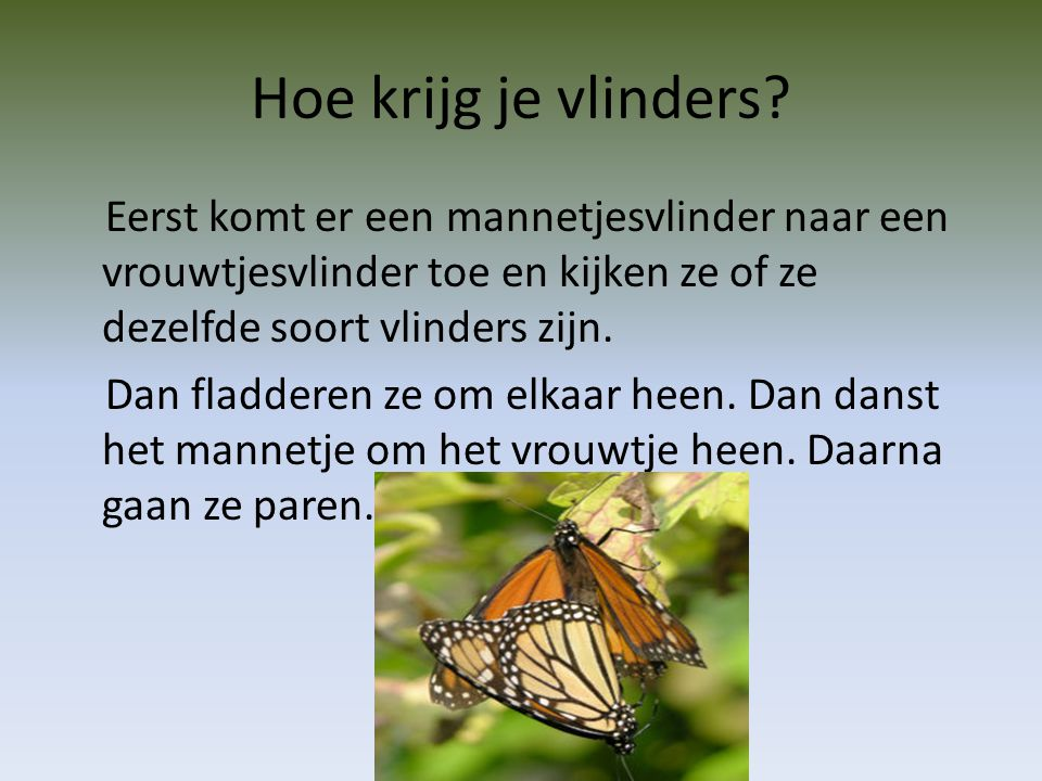 Hoe krijg je vlinders.