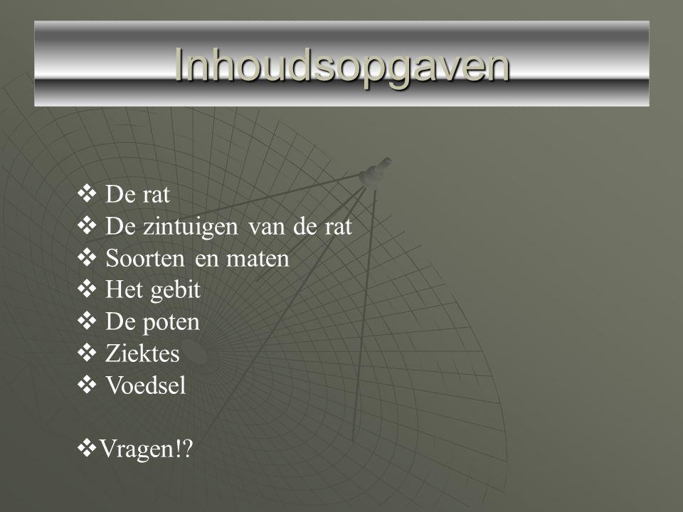 Inhoudsopgaven  De rat  De zintuigen van de rat  Soorten en maten  Het gebit  De poten  Ziektes  Voedsel  Vragen!?
