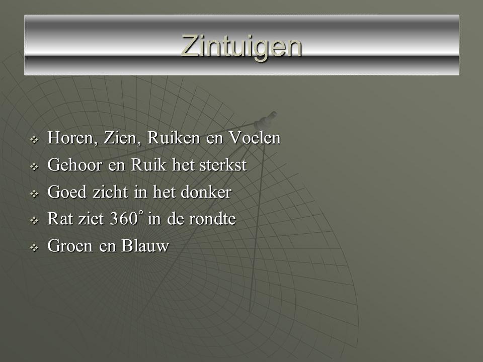  4 Meest voorkomende ratten in Nederland : Bruine rat, Muskusrat, Woelrat en Zwarte rat  Lengte rat : 18 – 25 cm.