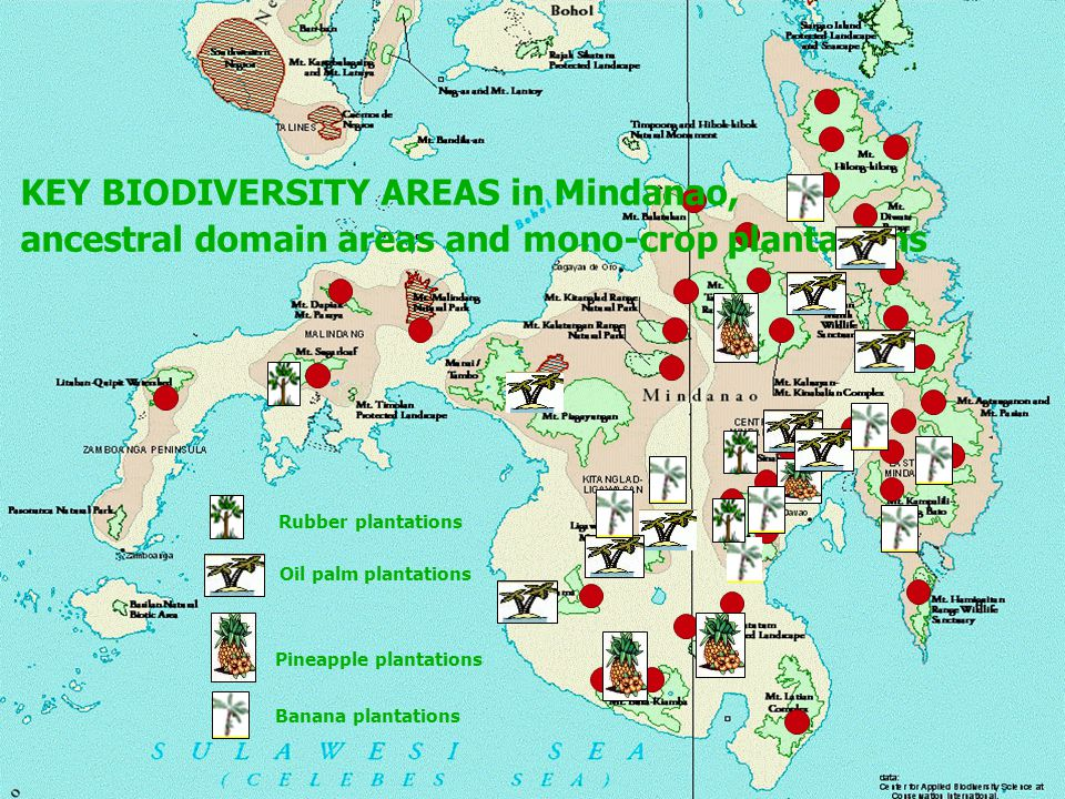 KEY BIODIVERSITY AREAS in Mindanao, ancestral domain areas and mono-crop plantations Rubber plantations Oil palm plantations Pineapple plantations Banana plantations