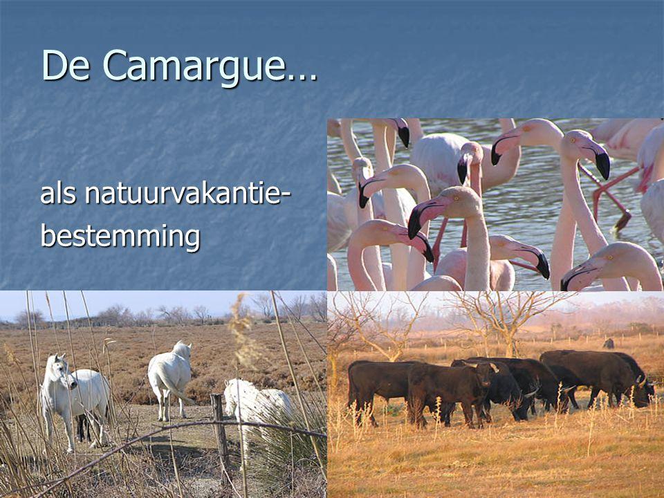 De Camargue… als natuurvakantie- bestemming