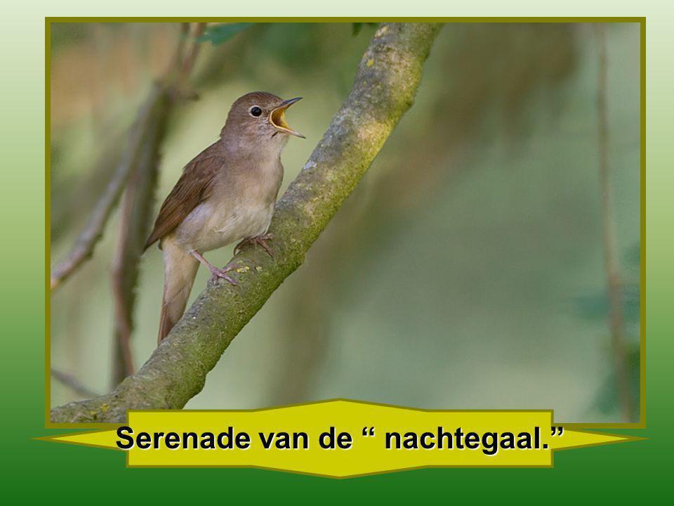 Zeg niet : Ik heb toch haast niets te geven, Denk aan dat vogeltje met zijn leven !