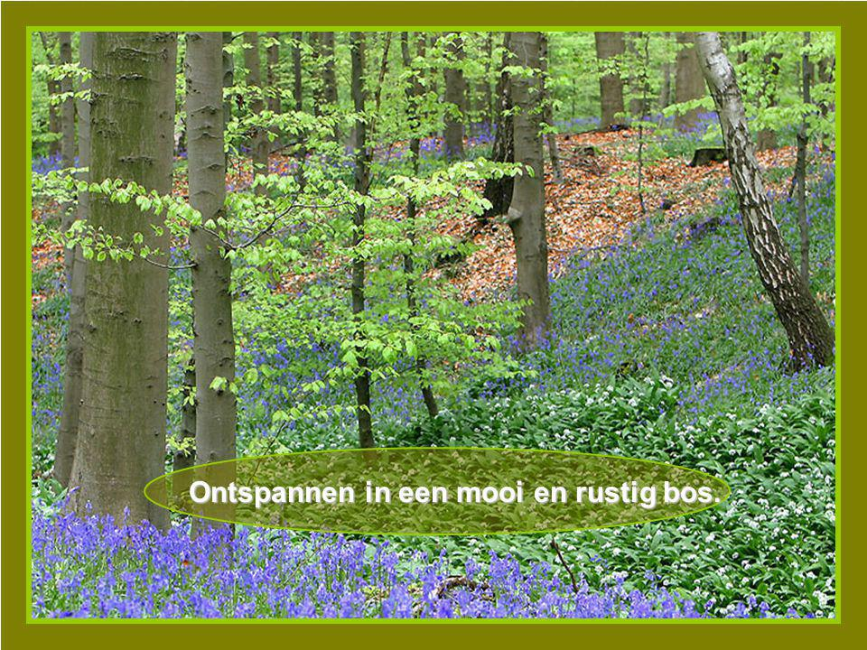Ontspannen in een mooi en rustig bos.