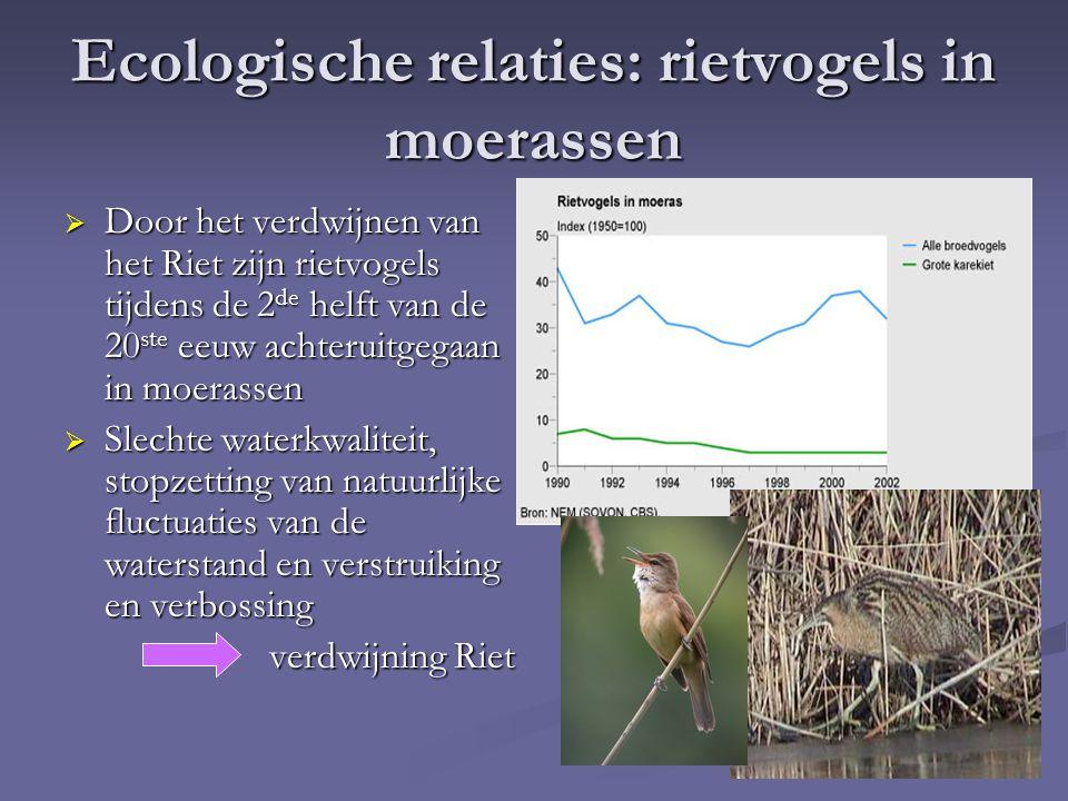 Ecologische relaties: rietvogels in moerassen  Door het verdwijnen van het Riet zijn rietvogels tijdens de 2 de helft van de 20 ste eeuw achteruitgeg