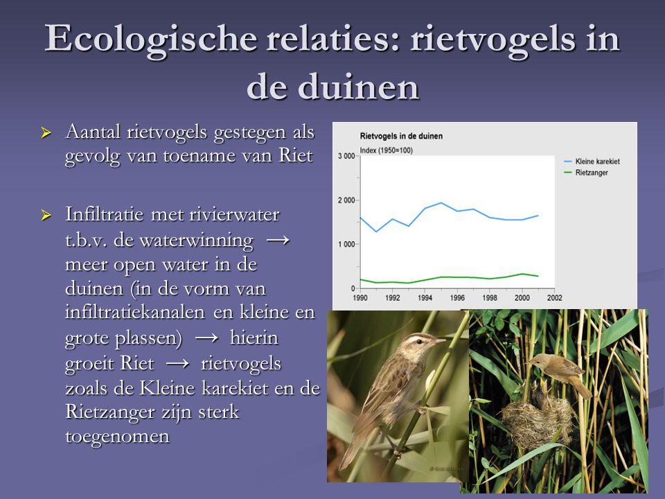 Ecologische relaties: rietvogels in de duinen  Aantal rietvogels gestegen als gevolg van toename van Riet  Infiltratie met rivierwater t.b.v.