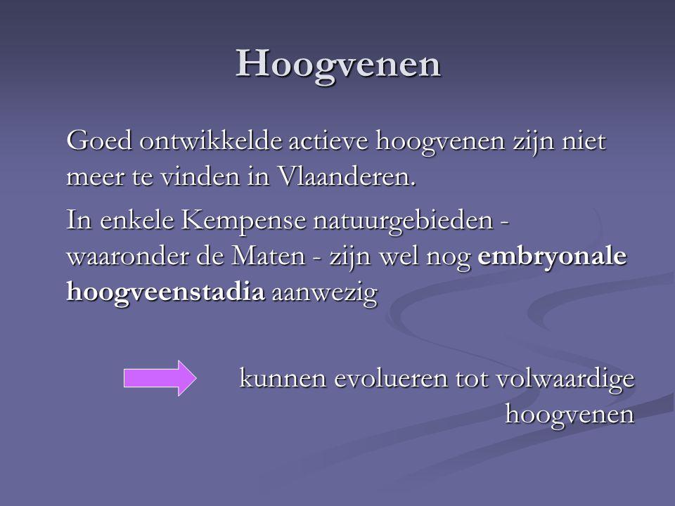 Hoogvenen Goed ontwikkelde actieve hoogvenen zijn niet meer te vinden in Vlaanderen. In enkele Kempense natuurgebieden - waaronder de Maten - zijn wel