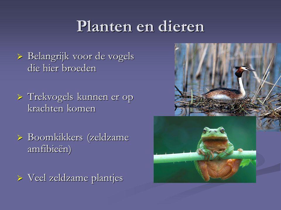 Planten en dieren  Belangrijk voor de vogels die hier broeden  Trekvogels kunnen er op krachten komen  Boomkikkers (zeldzame amfibieën)  Veel zeldzame plantjes