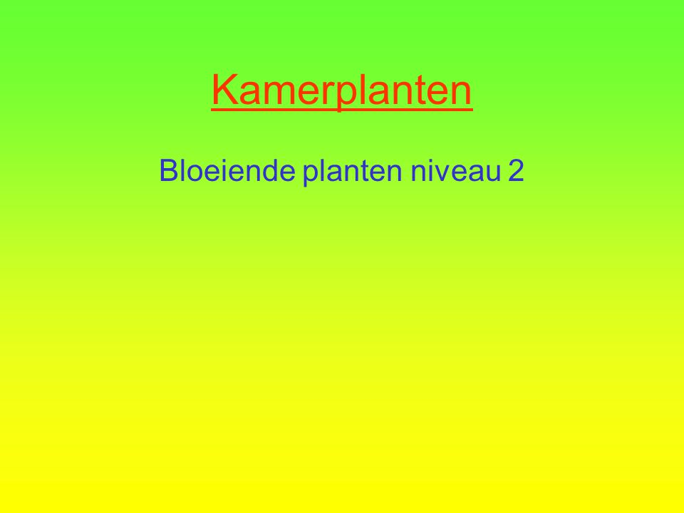 Kamerplanten Bloeiende planten niveau 2