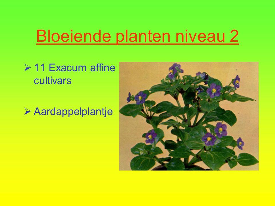 Bloeiende planten niveau 2 10 Hydrangea macrophylla Hortensia