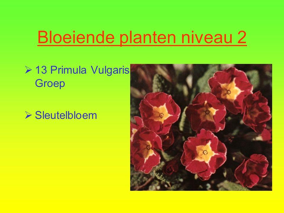 Bloeiende planten niveau 2  12 Hibiscus rosa- sinensis cultivars  Chinese roos