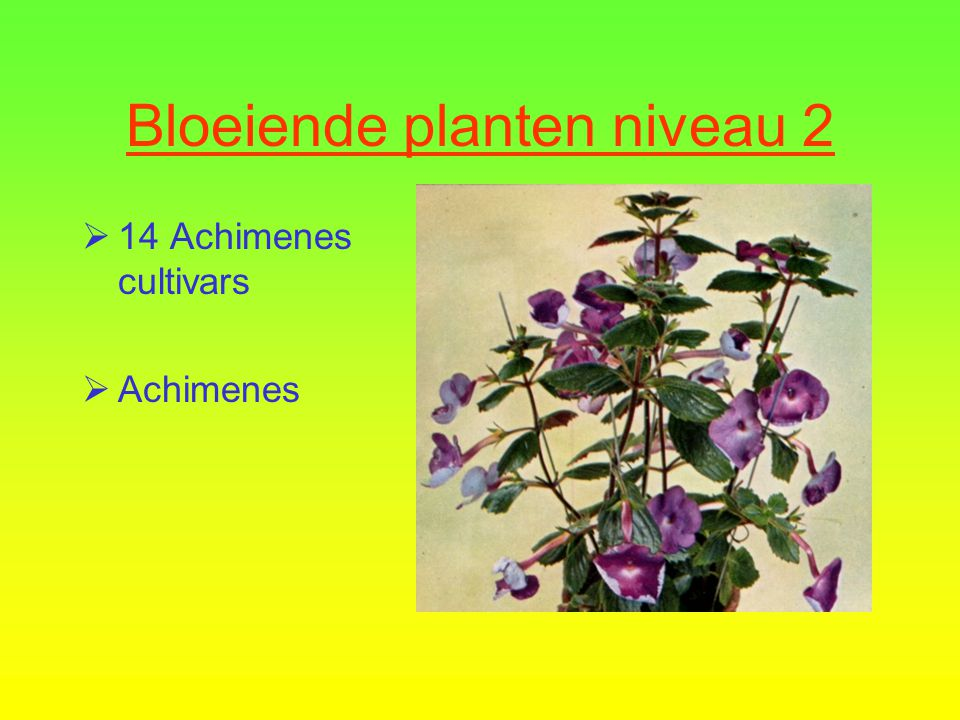 Bloeiende planten niveau 2  13 Primula Vulgaris Groep  Sleutelbloem