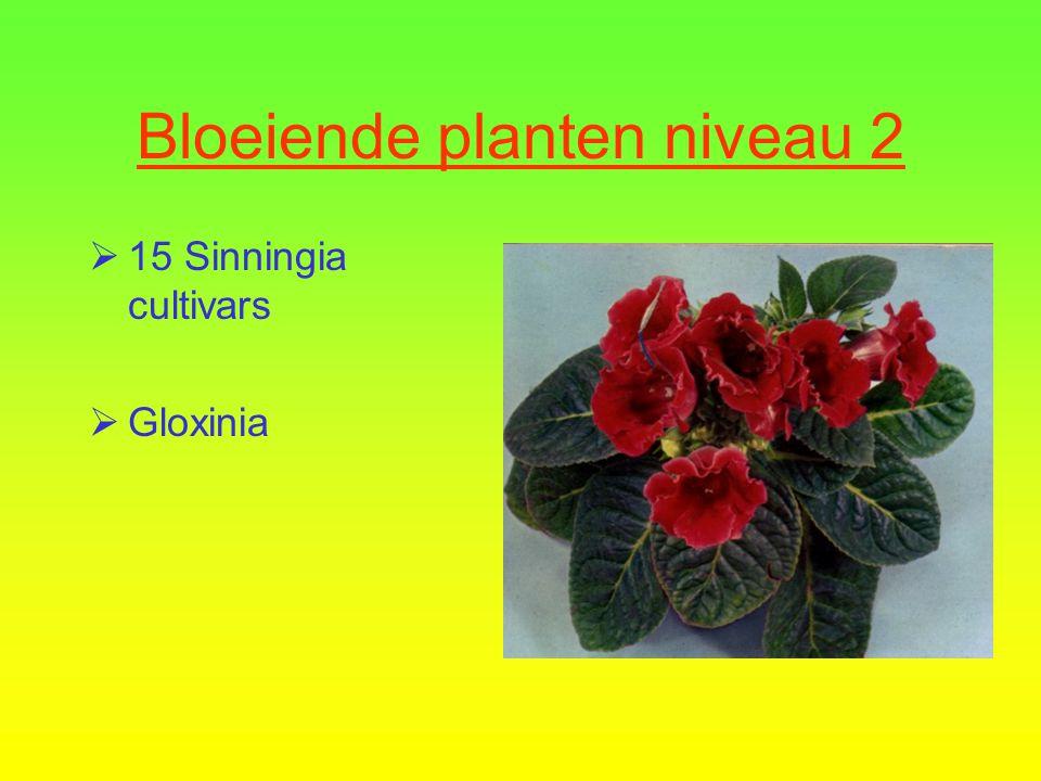 Bloeiende planten niveau 2  14 Achimenes cultivars  Achimenes
