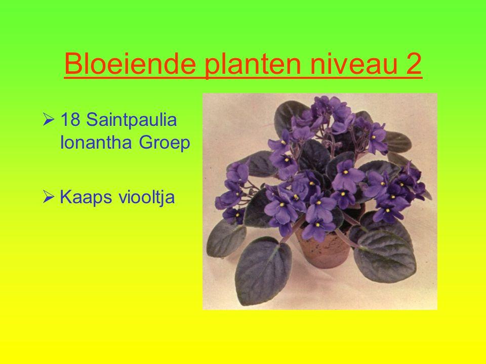 Bloeiende planten niveau 2  17 Spathiphyllum cultivars  Spathiphyllum