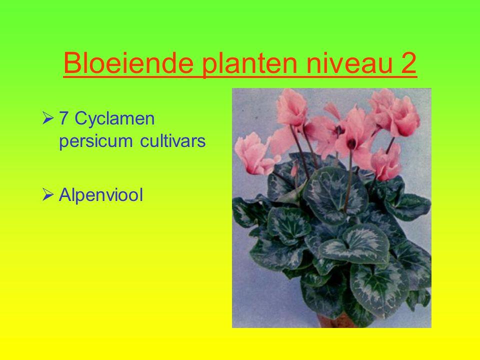 Bloeiende planten niveau 2  7 Cyclamen persicum cultivars  Alpenviool