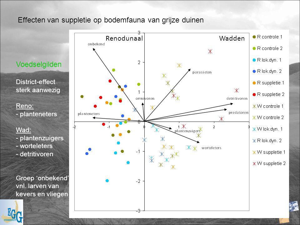 Effecten van suppletie op bodemfauna van grijze duinen Voedselgilden District-effect sterk aanwezig Reno: - planteneters Wad: - plantenzuigers - worte
